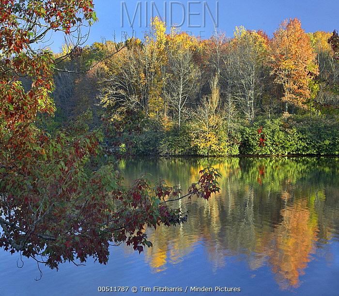 Deciduous forest in autumn, Price Lake, Blue Ridge Parkway, North Carolina  -  Tim Fitzharris