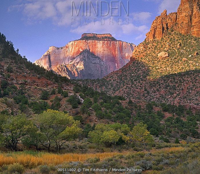 West Temple, Zion National Park, Utah  -  Tim Fitzharris
