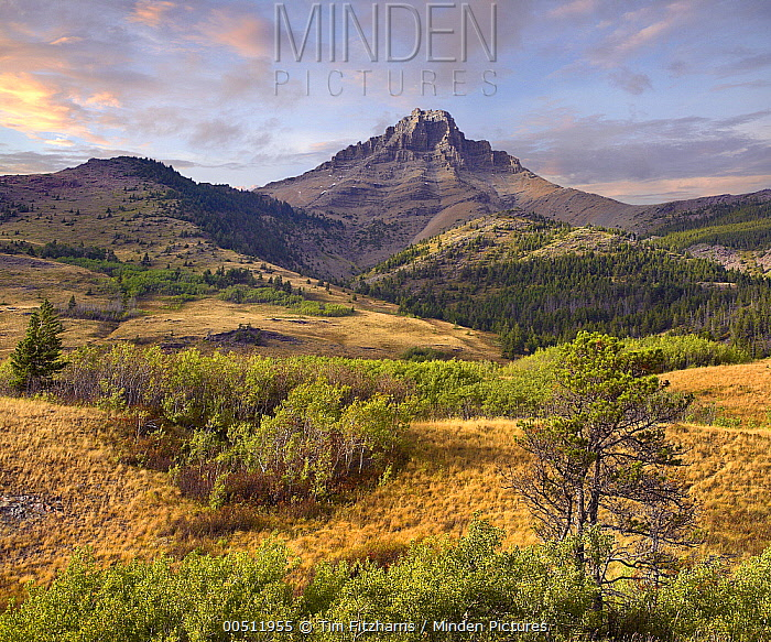 Mount Galwey, Waterton Lakes National Park, Alberta, Canada  -  Tim Fitzharris