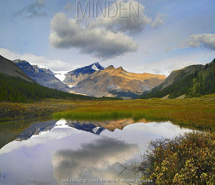 Dome Glacier and Mount Kitchener reflected in pond, Jasper National Park, Alberta, Canada  -  Tim Fitzharris
