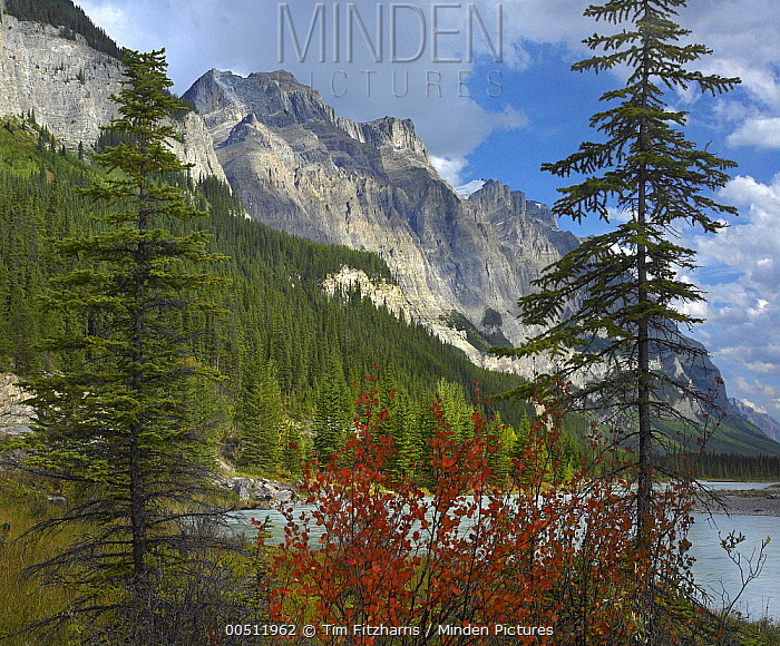 Boreal forest and Mount Wilson, Banff National Park, Alberta, Canada  -  Tim Fitzharris