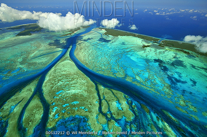 Aerial view of tidal channels in coral which feed central lagoon with sea water, Aldabra, Seychelles  -  Wil Meinderts/ Buiten-beeld