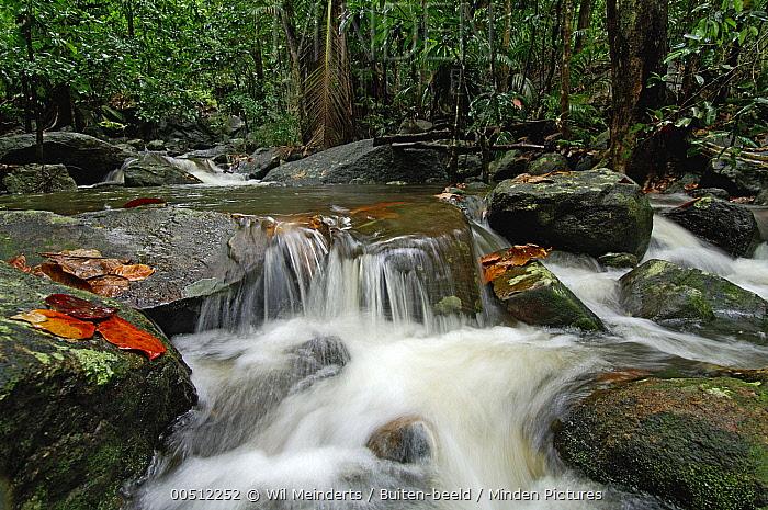 Waterfall, Silhouette Island, Seychelles  -  Wil Meinderts/ Buiten-beeld