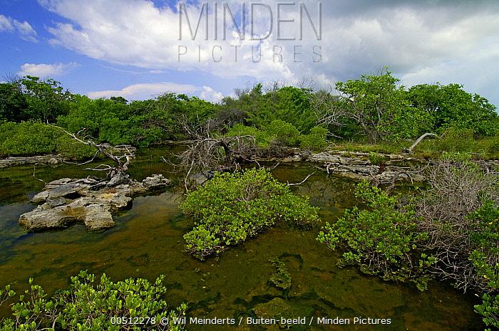 Coastal forest, Aldabra, Seychelles  -  Wil Meinderts/ Buiten-beeld
