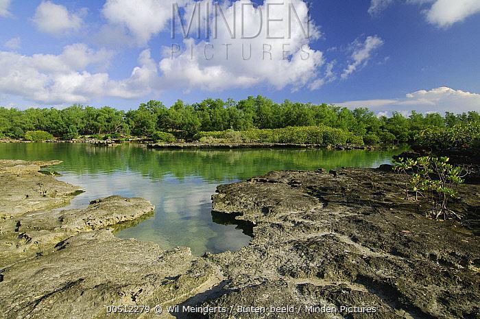 Lagoon surrounded by forest, Aldabra, Seychelles  -  Wil Meinderts/ Buiten-beeld