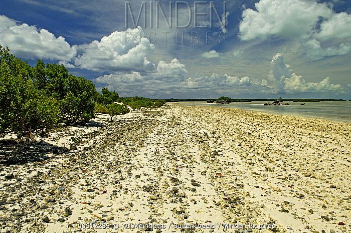 Beach, Aldabra, Seychelles  -  Wil Meinderts/ Buiten-beeld