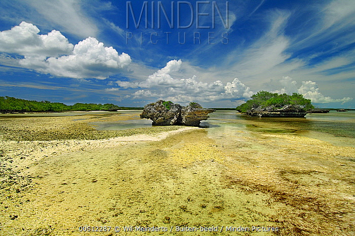 Mushroom-shaped, coral outcrop eroded by the tide, Aldabra, Seychelles  -  Wil Meinderts/ Buiten-beeld