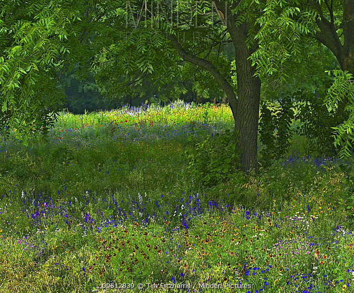 Wildflowers in meadow, Jacksonport State Park, Arkansas  -  Tim Fitzharris