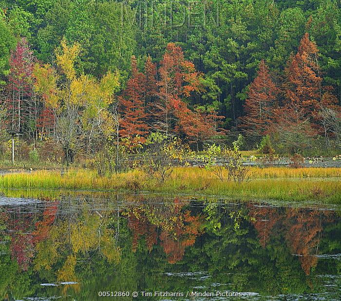 Millwood Lake State Park, Arkansas  -  Tim Fitzharris