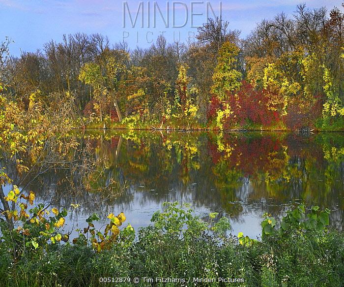 Marsh's Lake, Spruce Woods Provincial Park, Manitoba, Canada  -  Tim Fitzharris
