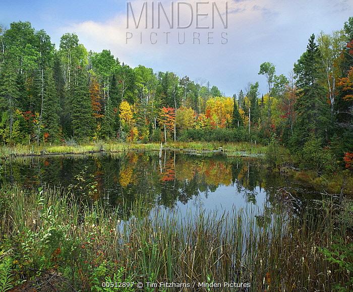 Autumn foliage, Algonquin Provincial Park, Ontario, Canada  -  Tim Fitzharris