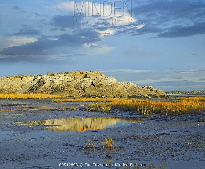 Tidal marsh, Riviere Trois Pistoles Quebec  -  Tim Fitzharris