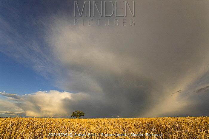 Dark clouds over a grain field, France  -  Ruben Smit/ Buiten-beeld