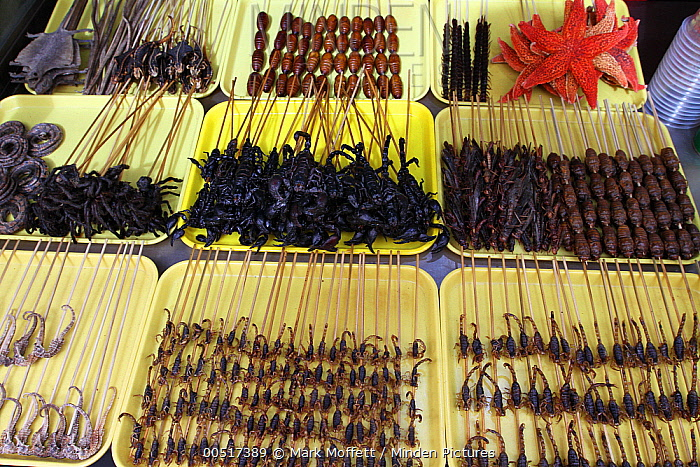 Scorpions, seahorses, spiders, starfish, and insects scewered for sale as food, Xiao Chi Jie Market, Beijing, China  -  Mark Moffett