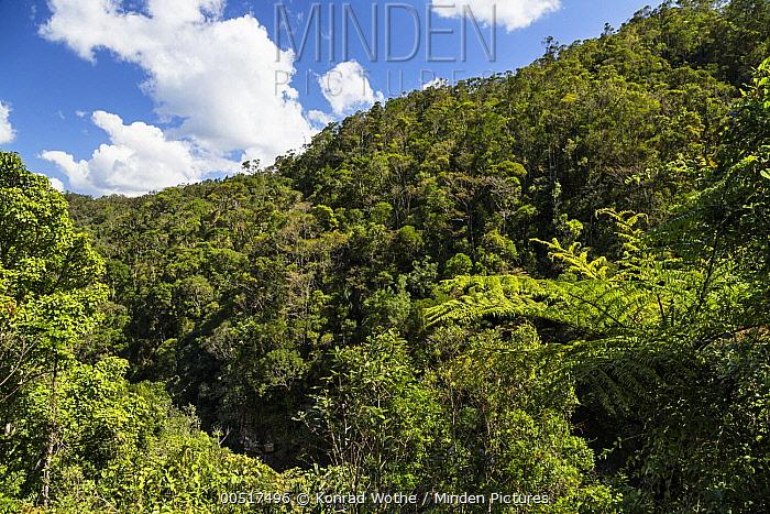 Rainforest, Ranomafana National Park, Madagascar  -  Konrad Wothe