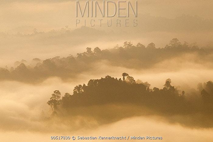 Lowland rainforest shrouded in clouds at sunrise, Danum Valley Conservation Area, Sabah, Borneo, Malaysia  -  Sebastian Kennerknecht