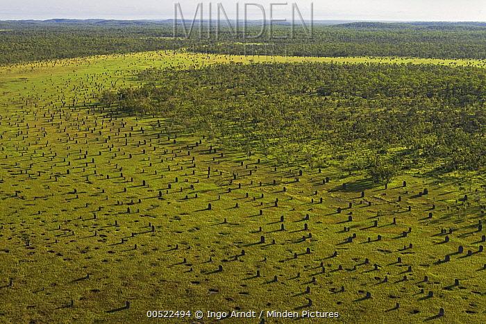 Magnetic Termite (Amitermes meridionalis) mounds in grassland, Litchfield National Park, Northern Territory, Australia  -  Ingo Arndt