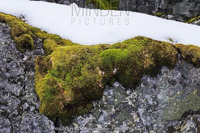 Moss on rock, Almirante Brown, Paradise Bay, Antarctic Peninsula, Antarctica  -  Matthias Breiter