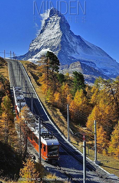 Larch (Larix sp) forest around train at the foot of the Matterhorn, Switzerland  -  Thomas Marent