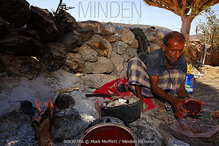 Dragon-blood Tree (Dracaena cinnabari) sap made into patties by Niah Malha, Firmihin, Socotra, Yemen  -  Mark Moffett