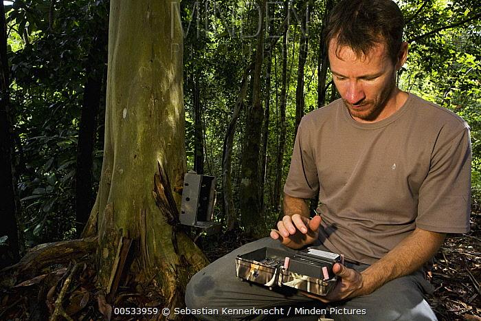 Sunda Clouded Leopard (Neofelis diardi) researcher Andrew Hearn checking camera trap, Kinabatangan River, Sabah, Borneo, Malaysia  -  Sebastian Kennerknecht