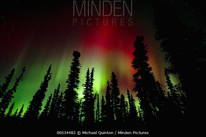 Aurora borealis, Wrangell-Saint Elias National Park, Alaska  -  Michael Quinton