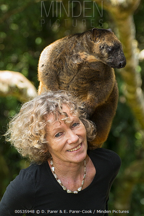 Lumholtz's Tree-Kangaroo (Dendrolagus lumholtzi) held by Margit Cianelli, Atherton Tableland area, Queensland, Australia  -  D. Parer & E. Parer-Cook