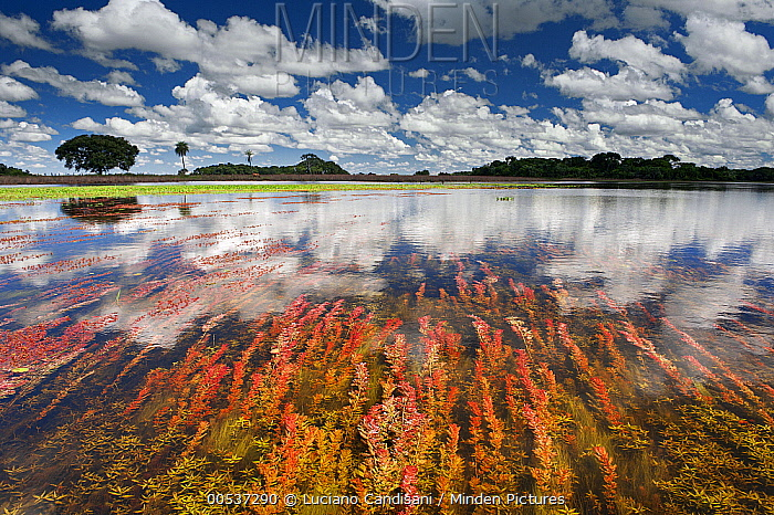 Clouds reflected in flooded field at the end of the wet season, Pantanal, Brazil  -  Luciano Candisani