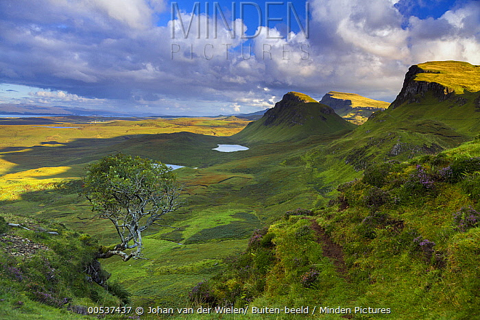 Quiraing tree and mountains, Trotternish Peninsula, Great Britain  -  Johan van der Wielen/ Buiten-bee