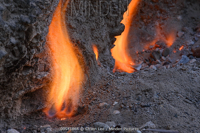 Smokeless fires dance where natural gas seeps from cracks in limestone rocks, Tanjung Api National Park, Ampana, Indonesia  -  Ch'ien Lee