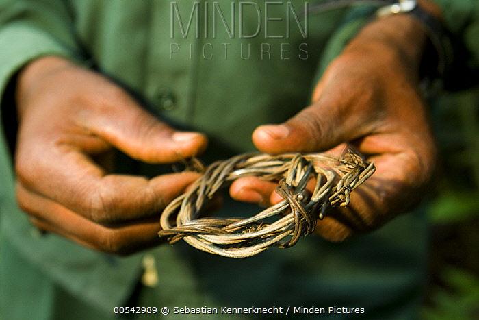 Anti-poaching snare removal team member, Godfrey Nyesiga, removing illegally set foot snare, Kibale National Park, western Uganda  -  Sebastian Kennerknecht