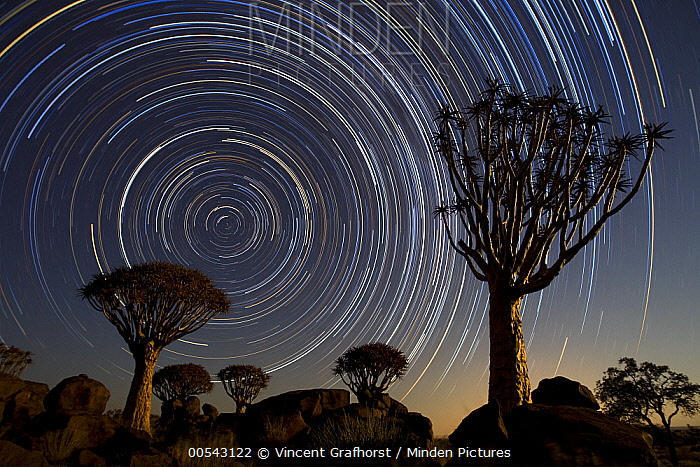 Quiver Tree (Aloe dichotoma) group and star trails, Keetmanshoop, Namibia, stacked image*  -  Vincent Grafhorst