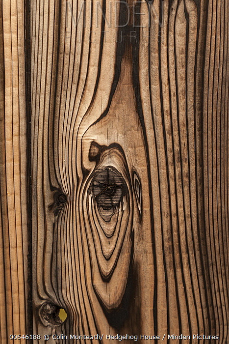Wood grain, Kyoto, Japan  -  Colin Monteath/ Hedgehog House