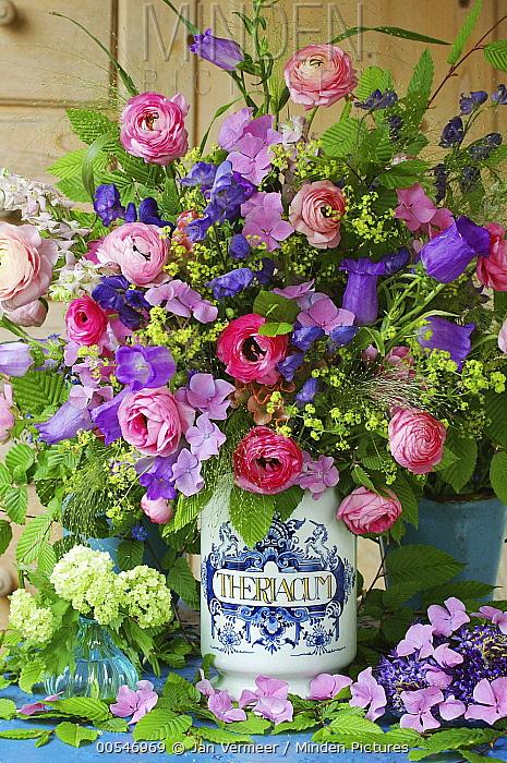 Ranunculus (Ranunculus sp) flower boquete and pot  -  Jan Vermeer