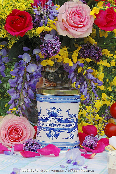 Rose (Rosa sp) flower bouquet and pot  -  Jan Vermeer