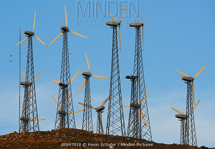 Windmill farm, Tehachapi Pass, California  -  Kevin Schafer