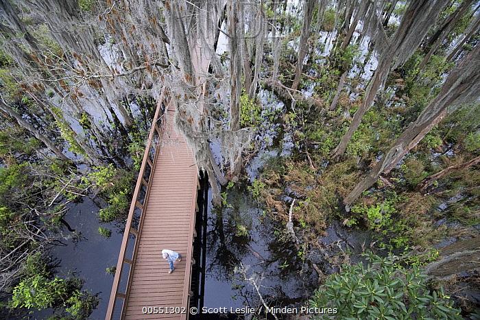 Boardwalk through swamp, Okefenokee National Wildlife Refuge, Georgia  -  Scott Leslie