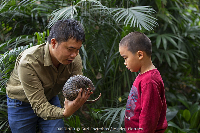 Malayan Pangolin (Manis javanica) conservationist, Thai Van Nguyen, showing rescued three month old baby to young boy, Carnivore and Pangolin Conservation Program, Cuc Phuong National Park, Vietnam, digitally removed object in background  -  Suzi Eszterhas