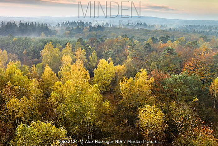 Forest in autumn, Overijssel, Netherlands