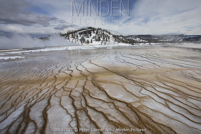 Bacterial mats, Grand Prismatic Spring, Yellowstone National Park, Wyoming