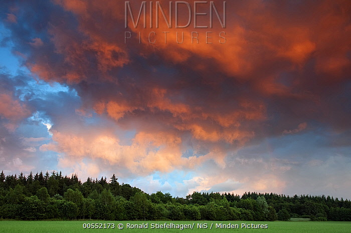 Thunderstorm clouds at sunset over forest, Drenthe, Netherlands