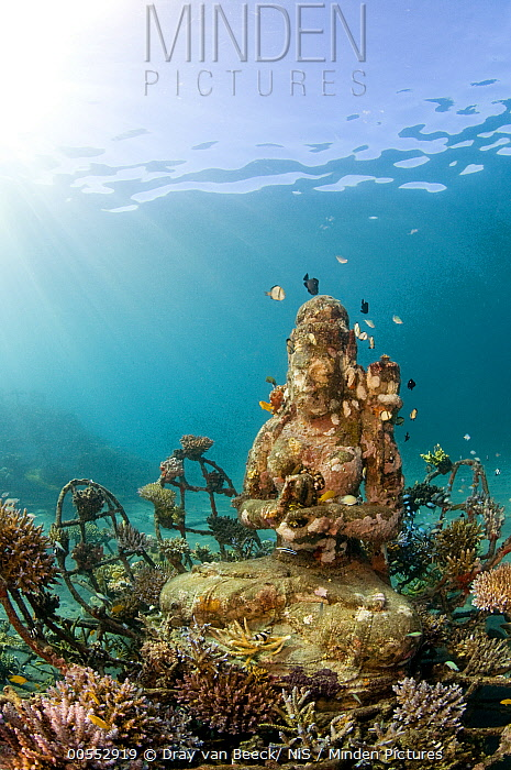 The Coral Goddess, underwater living sculpture, by Celia Gregroy, Living Coral Art Project, Bali, Indonesia.
