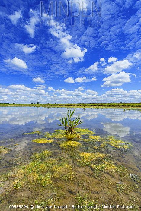 Marsh in summer, Netherlands
