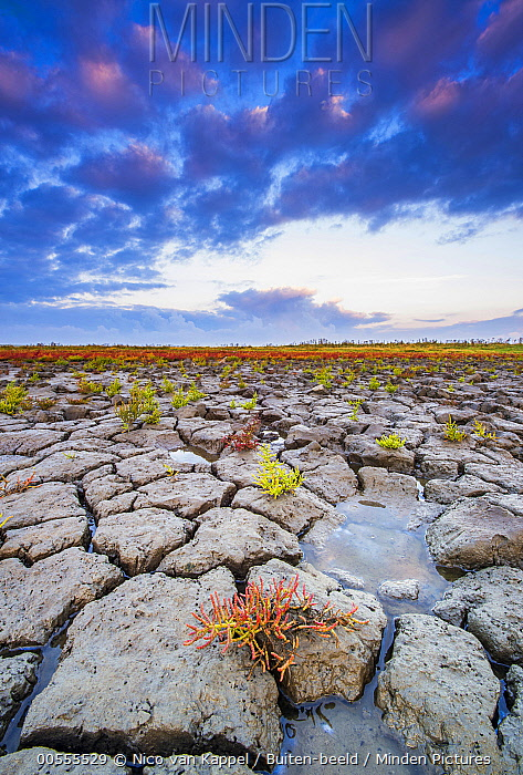 Mud flat at low tide, sunrise, Oosterschelde National Park, Netherlands