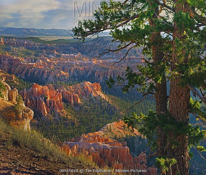 Hoodoos, Bryce Point, Bryce Canyon National Park, Utah