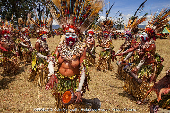 Women in ritual make-up and traditional clothing dancing during a sing-sing, Goroka Show, Goroka, Eastern Highlands, Papua New Guinea