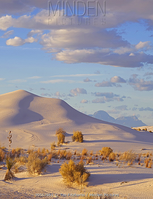 Sand dune and shrubs, White Sands National Monument, New Mexico