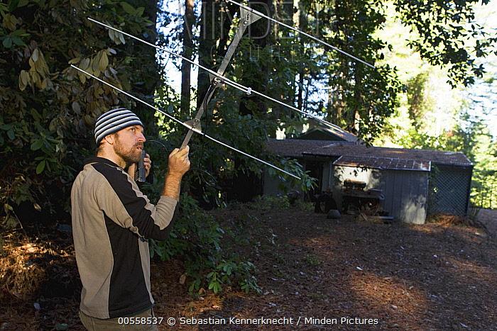 Mountain Lion (Puma concolor) biologist, Paul Houghtaling, using telemetry to track mother and cubs near houses, Santa Cruz Puma Project, Santa Cruz, Monterey Bay, California