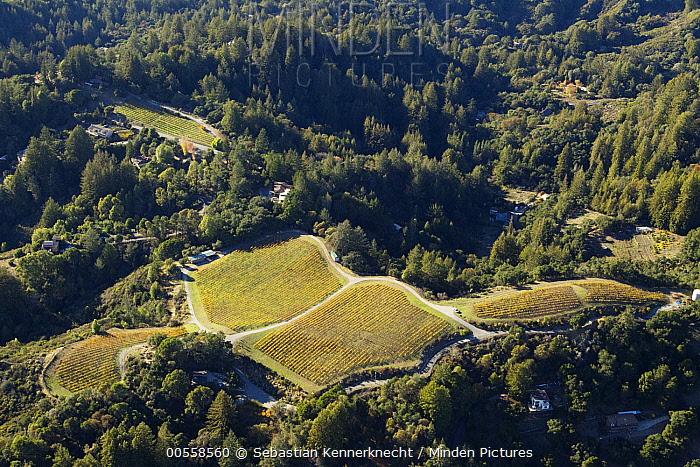 Agricultural land surrounded by natural habitat, Santa Cruz Mountains, Monterey Bay, California
