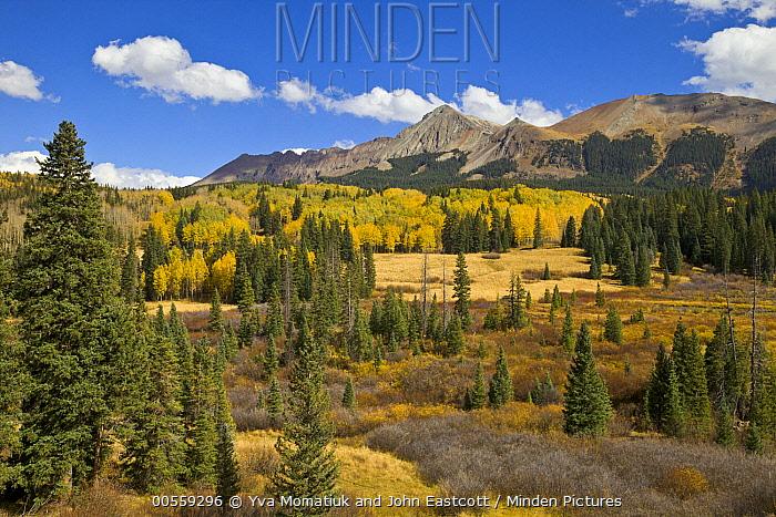 Fall colors in mountain meadow, Rocky Mountains, Colorado